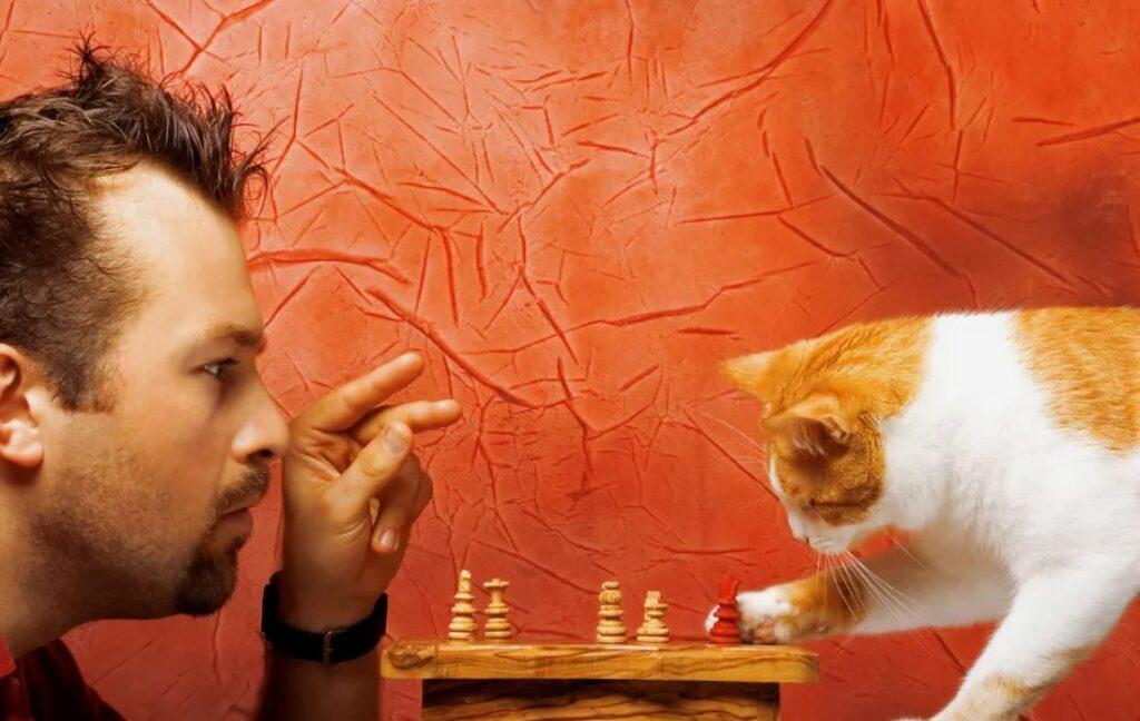 Как говорить с кошкой на одном языке